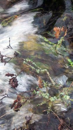february-brook