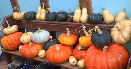 pumpkins-on-pew